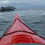 לוויתן וקיאק בים